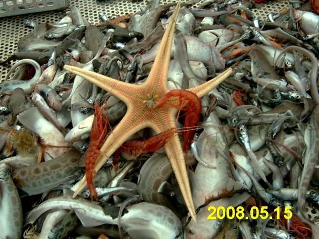mar-101-fishing viability, Argolikos Gulf