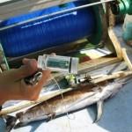 mar-91-open ocean fisheries