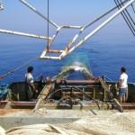mar88-TRAWPLAN-trawl, aegean, ionian sea